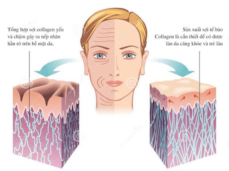 collagen trong cơ thể là gì